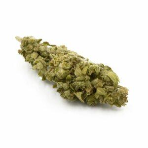 Fleur de cannabis Gelato 100% légal
